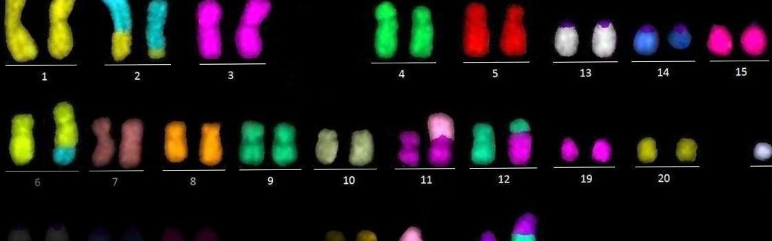 zaklad_patalogi_molekularnej_slider